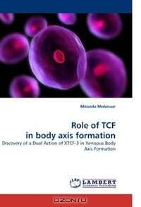 Miranda Molenaar / Role of TCF in body axis formation: Discovery of a Dual Action of XTCF-3 in Xenopus Body Axis Formation / A novel role of TCF family in body axis formation. Revolutionary high impact discoveries are described, elucidating the ...