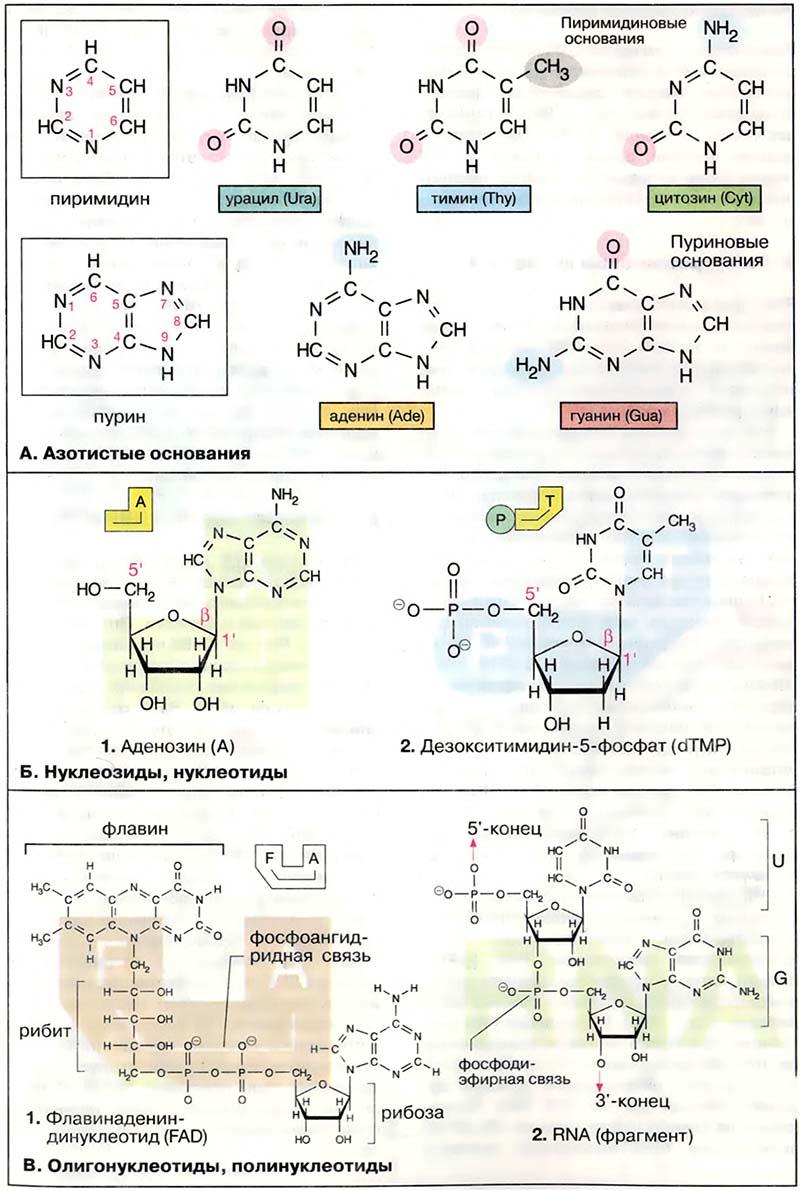 схема про разделы и задачи биохимии фото